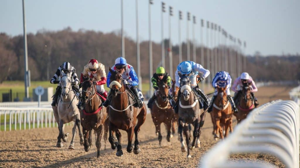 Best Position in Horse Racing